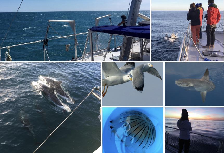 Sciences participatives à bord du navire Sea Explorer