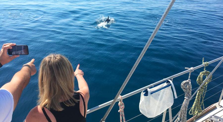 Sea Explorer découverte des dauphins
