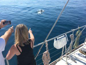 Sciences participatives à bord du navire Sea Explorer Association Terre Marine
