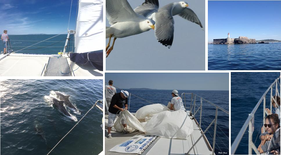 Exploration vie marine et dauphins catamaran Sea Explorer Terre Marine