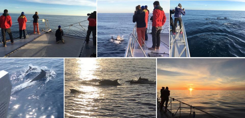 exploration journée dauphins large Cap d'Agde - navire Sea Explorer - association TERRE MARINE