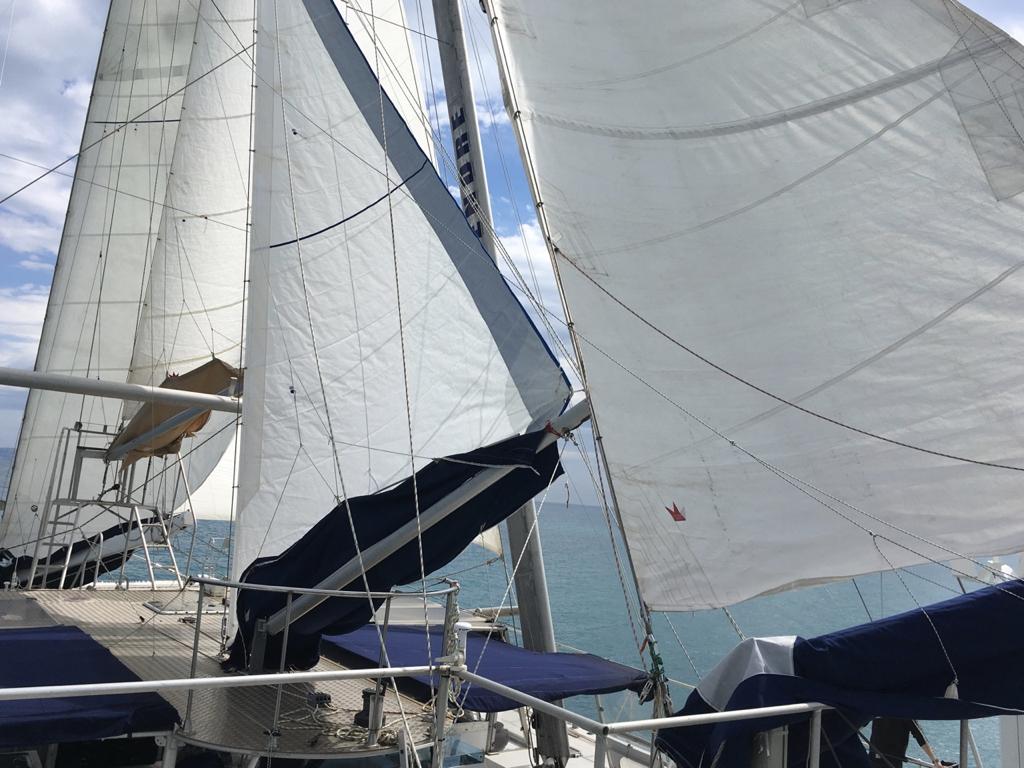 navigation voile - observation dauphins - sea explorer - terre marine