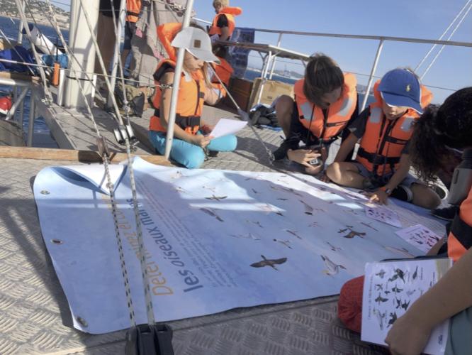 découverte vie marine enfants scolaires - navigation classes en mer - Sea Explorer - Terre Marine