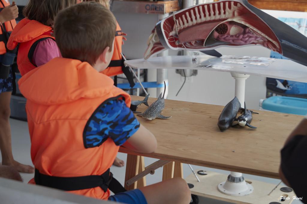 séances scolaires à bord du Sea Explorer Dauphins et Vie Marine Association Terre Marine