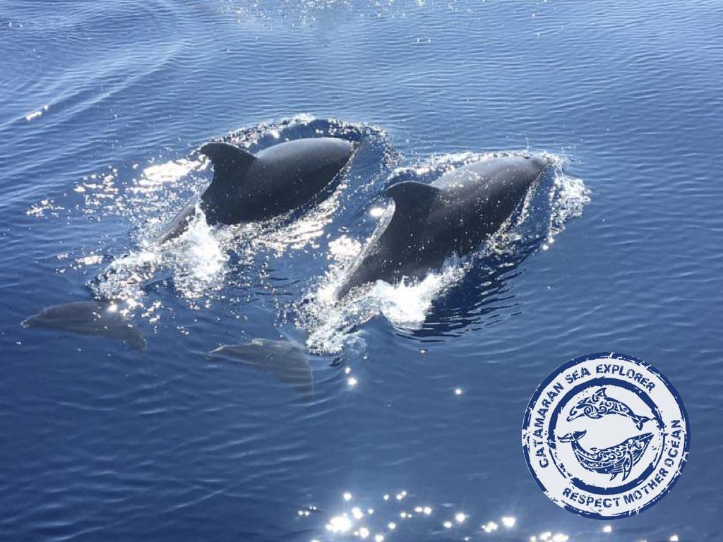 grand dauphin association Terre Marine