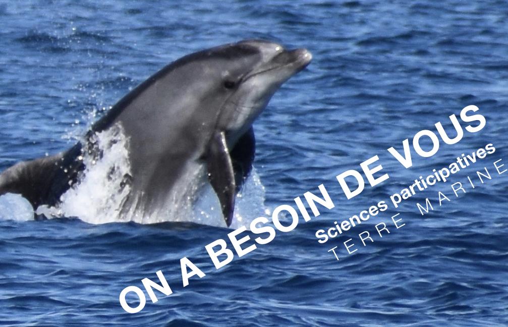 Sciences participatives en mer Grand Dauphin du golfe du Lion Association Terre Marine