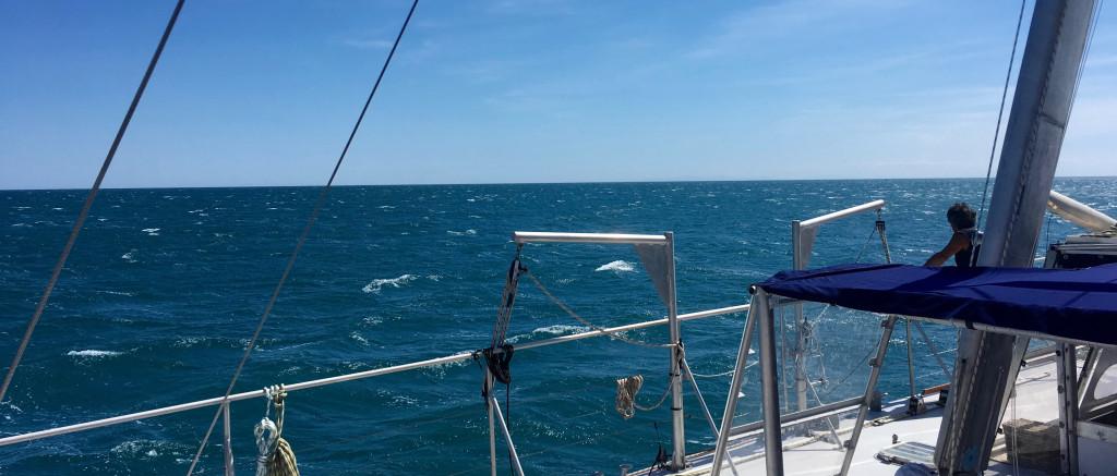 découverte en mer pour tous, vie marine et dauphin, Sea Explorer de l'association Terre Marine